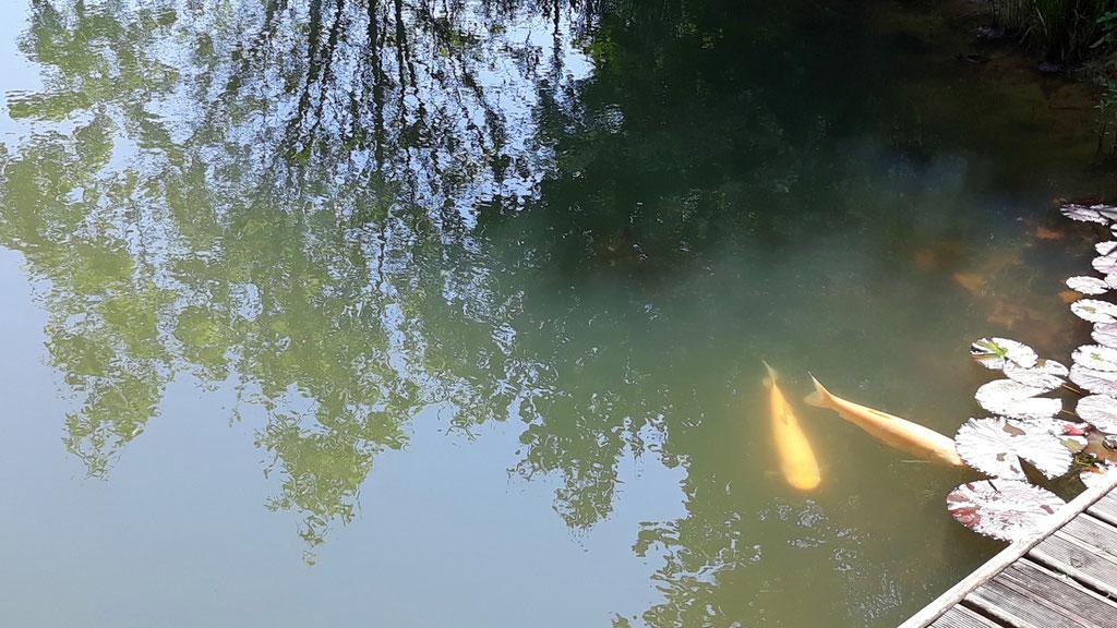 05.05. die Fische am Ponton