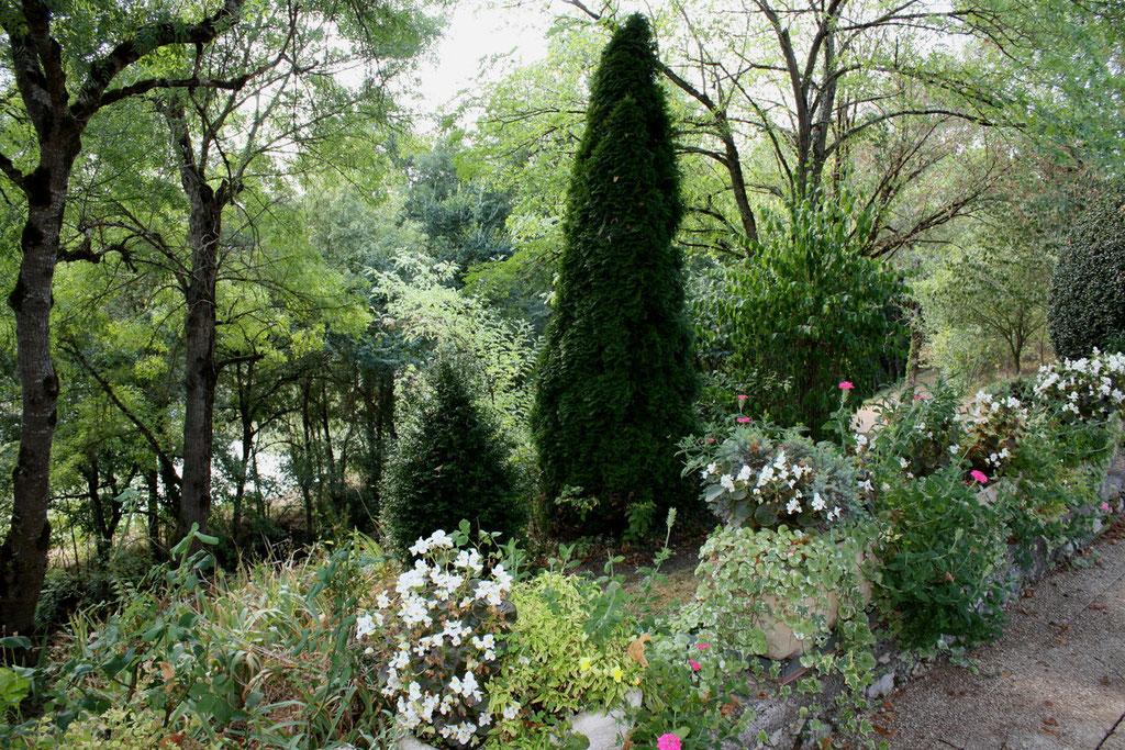 Jardin  vue de sous   les tilleuls