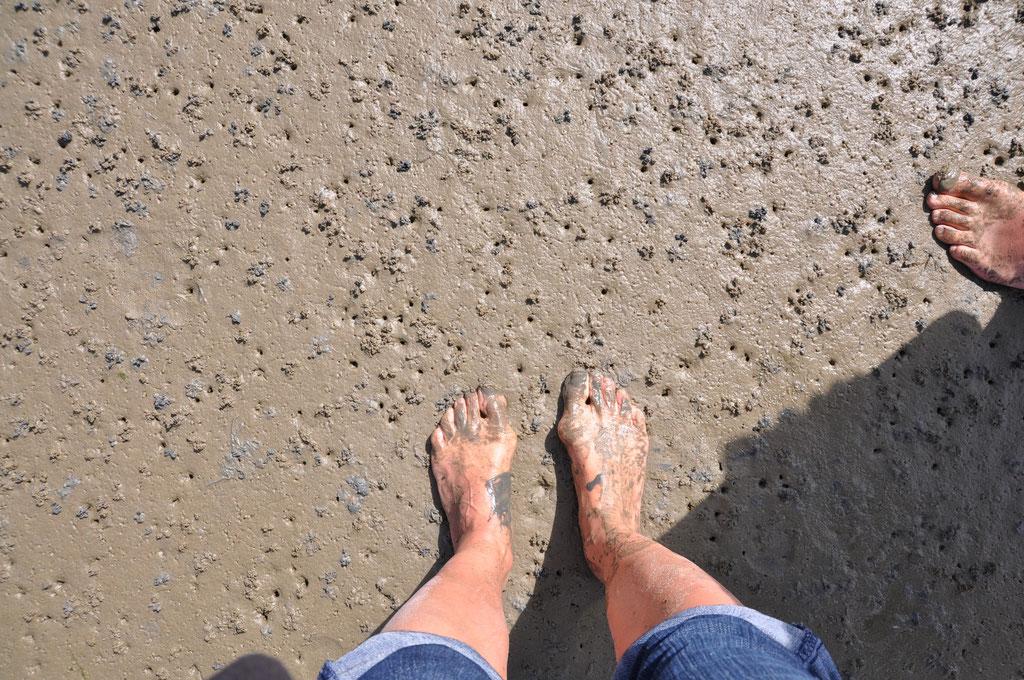 Unter unseren Füßen 100te von Wattwürmern (die Lunge der Nordsee)