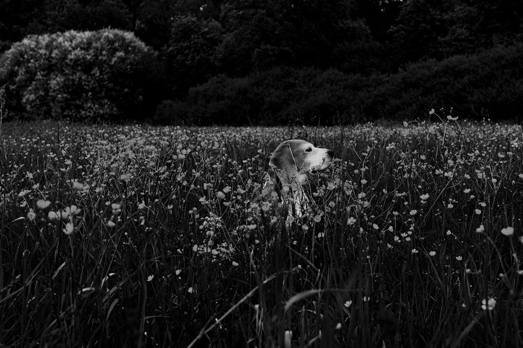 Hundefotos, Tierporträt, Bad Berka, Leica Q