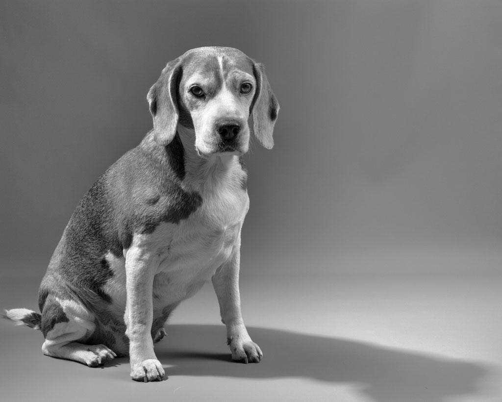 Hundefotos, Tierporträt Fotostudio Weimar, Leica Q