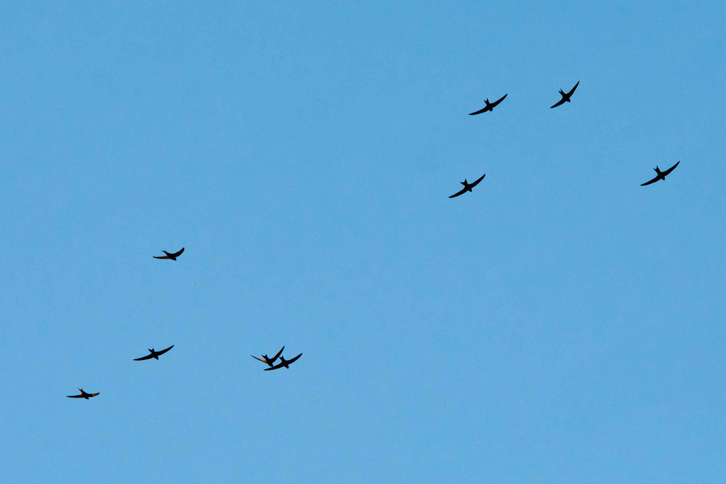 kollektiver Überflug