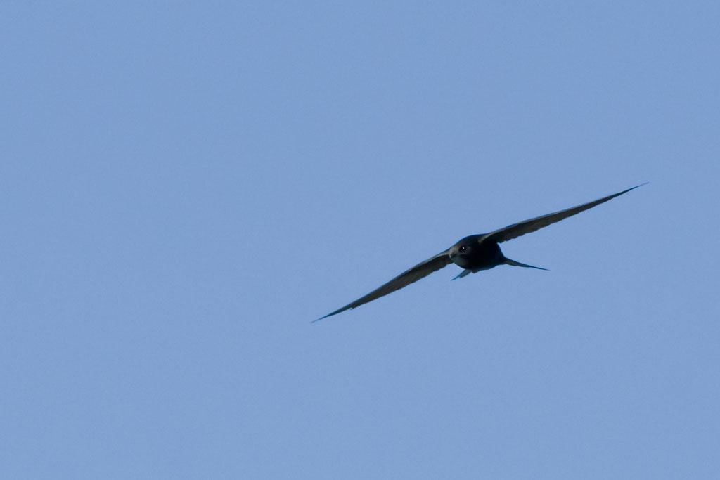Flügel wie Rasierklingen