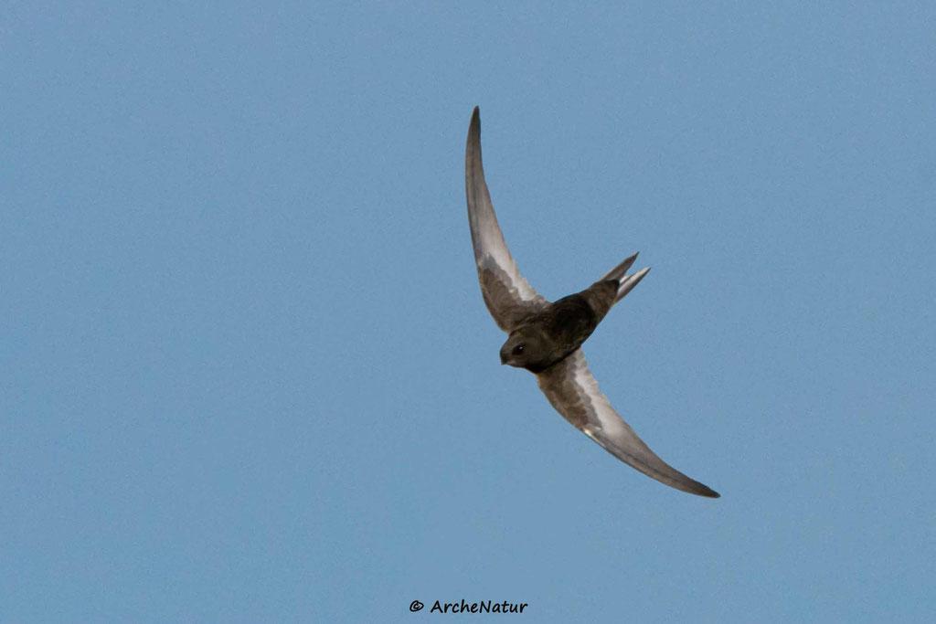 Ja, es sind die Flügelunterseiten :-))) !