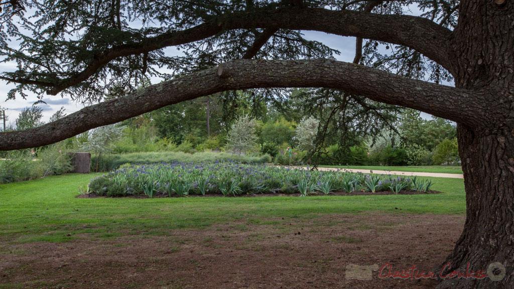 Promenade des iris bleus, conception de Chantal Colleu-Dumond. Prés du Goualoup, Domaine de Chaumont-sur-Loire. Mercredi 26 août 2015. Photographie © Christian Coulais