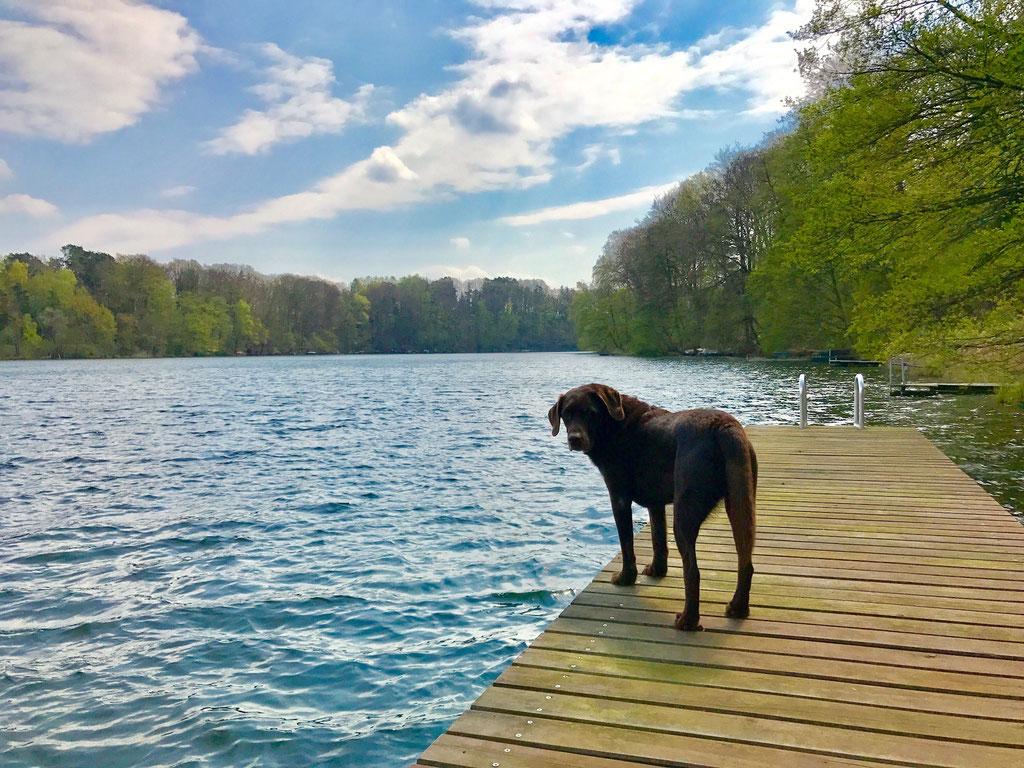 Urlaub mit Hund in Brandenburg