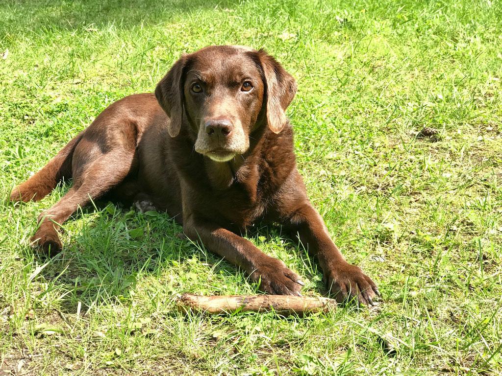 Urlaub mit Hund Brandenburg eingezäuntes Grundstück