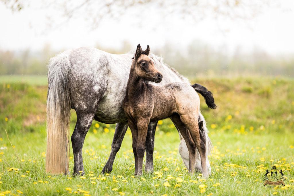 Pferdefotografie Fohlen Farbzucht Pferdefoto Pferdezucht Mecklenburg-Vorpommern Reiter Pferde