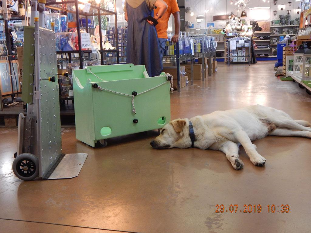 Lo stanco Marley attende di provare il saliscale