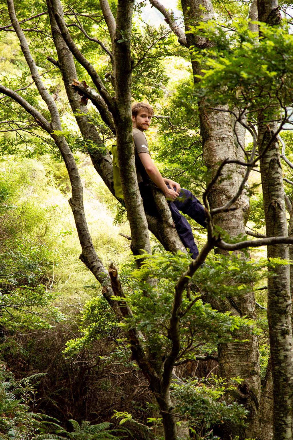 Jack climbing tress along the Rob Roy glacier track