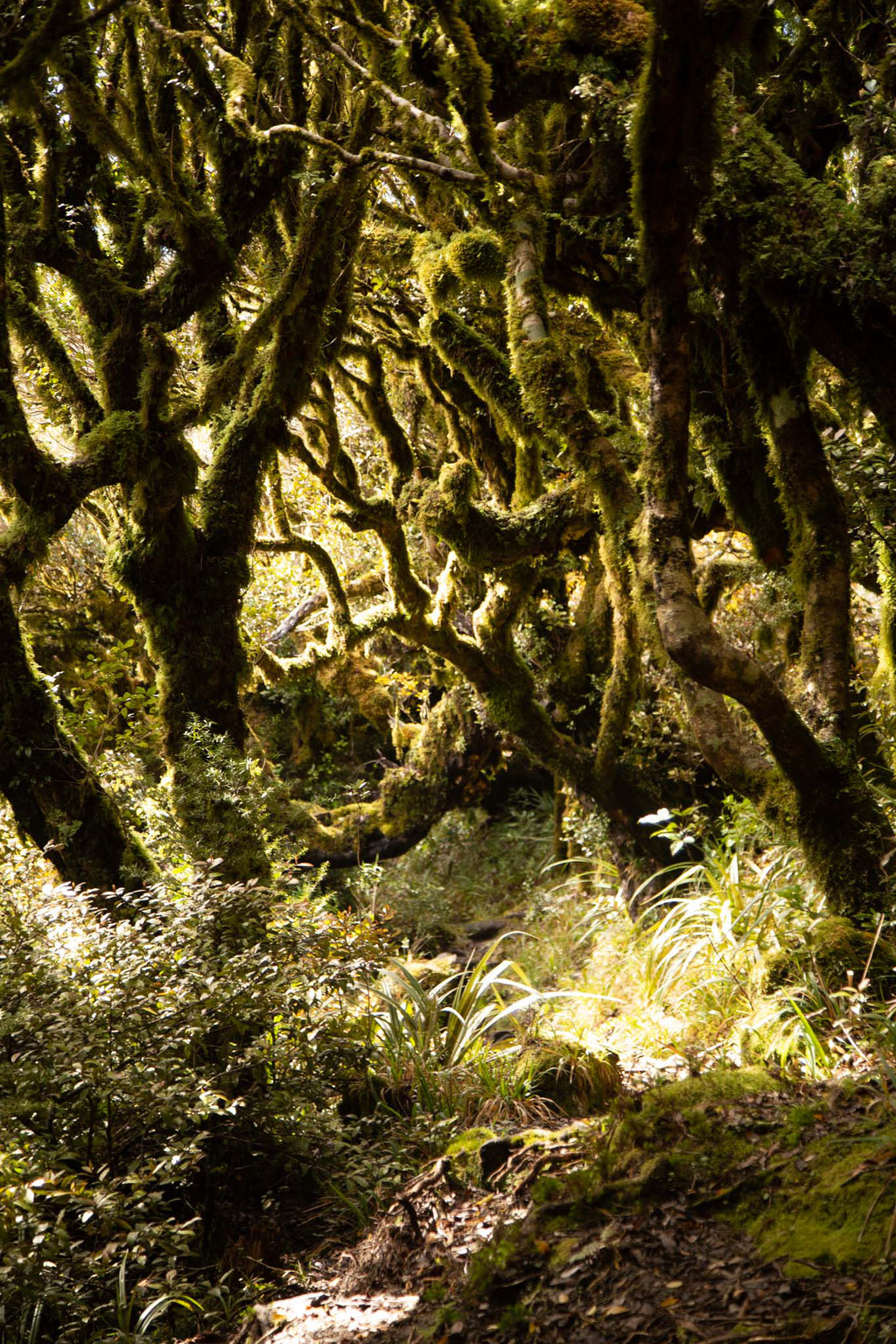 The goblin forest - Mount Egmont National Park