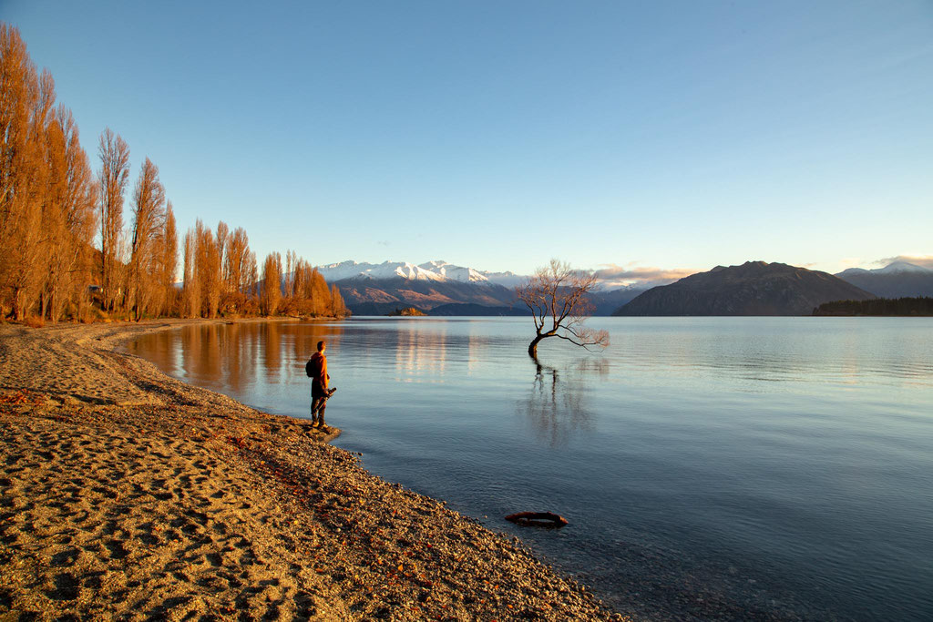The famous lone Willow tree in Wanaka