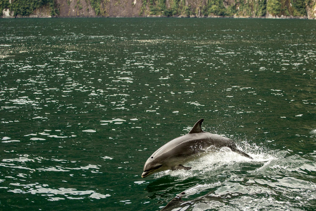 Dolphins swam along our vessel for ages.