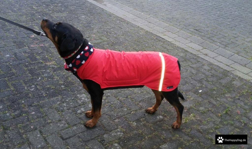 Thermo-Hundemantel, Hundemantel Maßanfertigung,  Hundemantel nach Maß