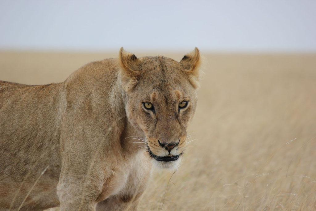 Serengeti Safari - Kilimanjaro Company