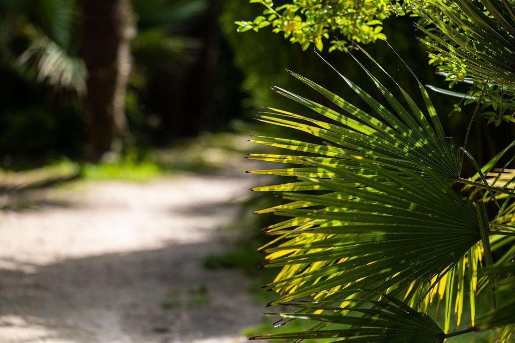 Verwunschene Wege im Botanischen Garten in Vauville.