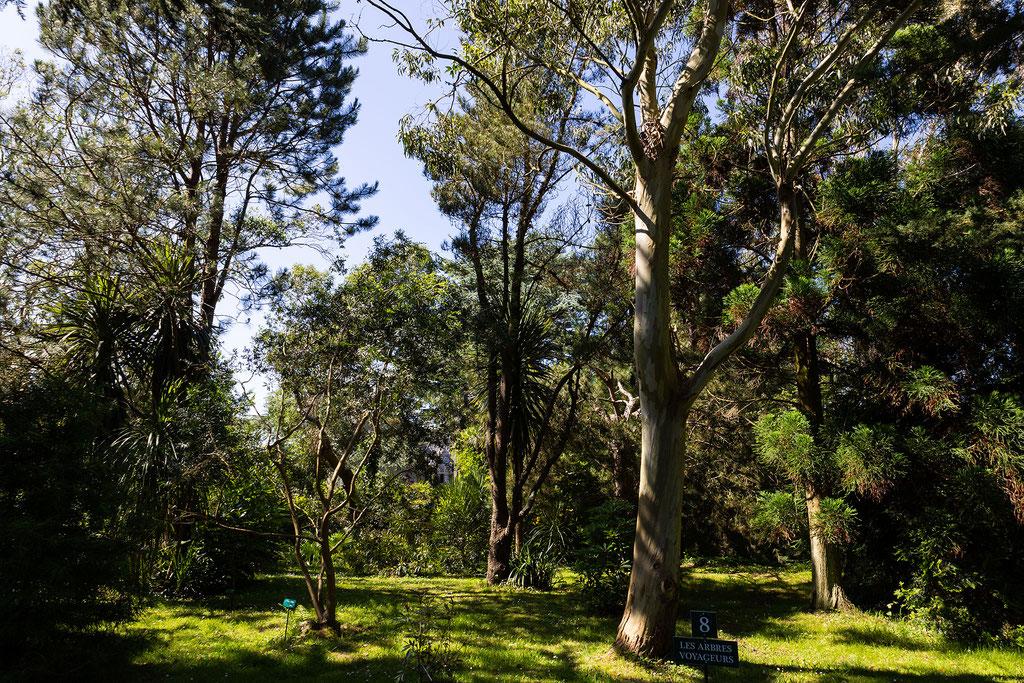 Ihr wandelt im Jardin Botanique de Vauville in einem Urwald.