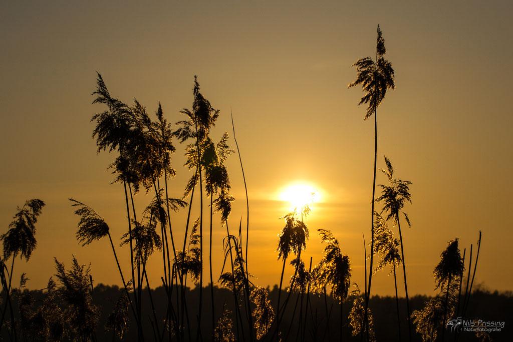 Sonnenuntergang an der Uecker