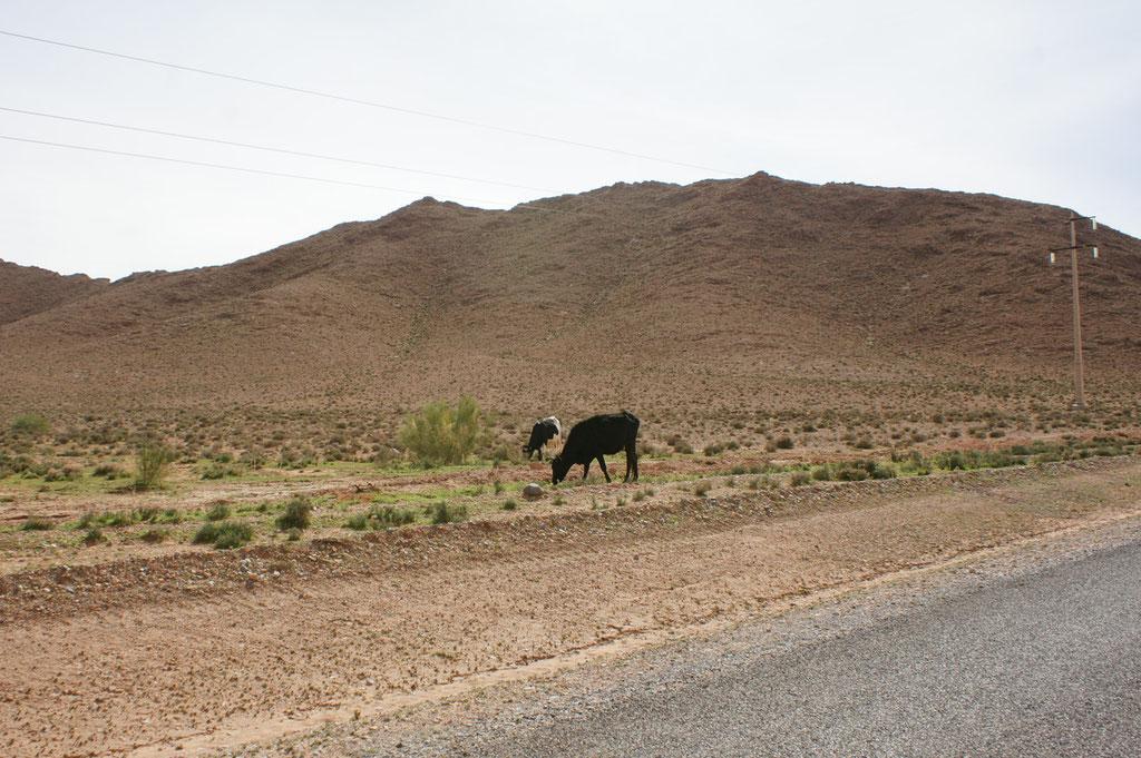 """Unsere Brotaufstrichproduzenten """"la vache qui rit"""" überall erhältlich"""
