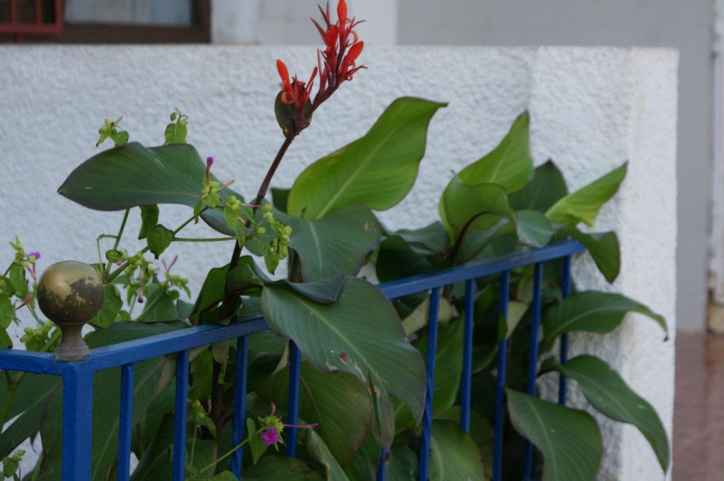Blumen im November!