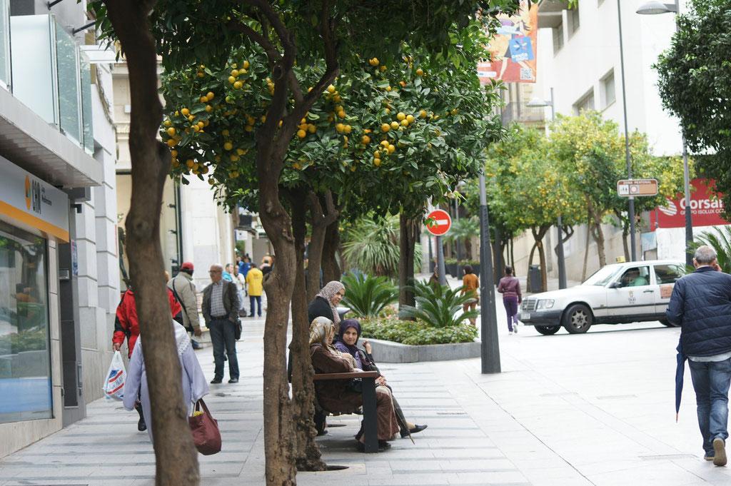 Fussgängerzone in Ceuta. Ueberall gibt es hier Orangenbäume