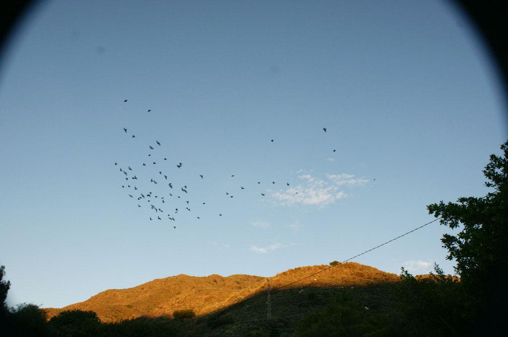 Nur das Zwitschern der Vögeln und das Summen der Bienen ist zu hören