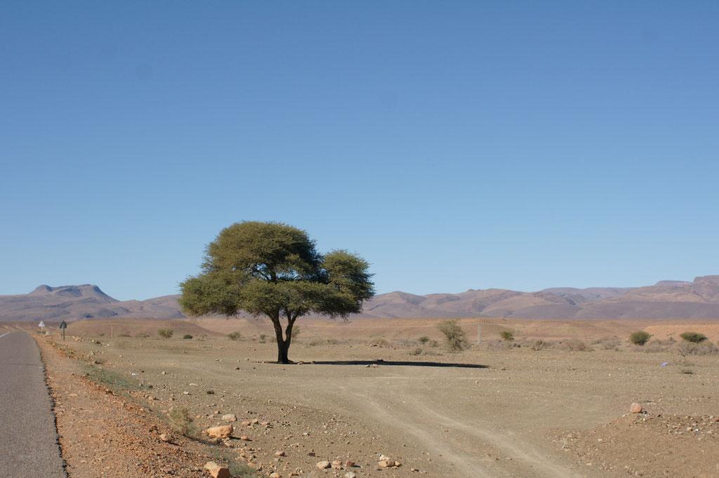 Ein einzelner Baum in der Weite