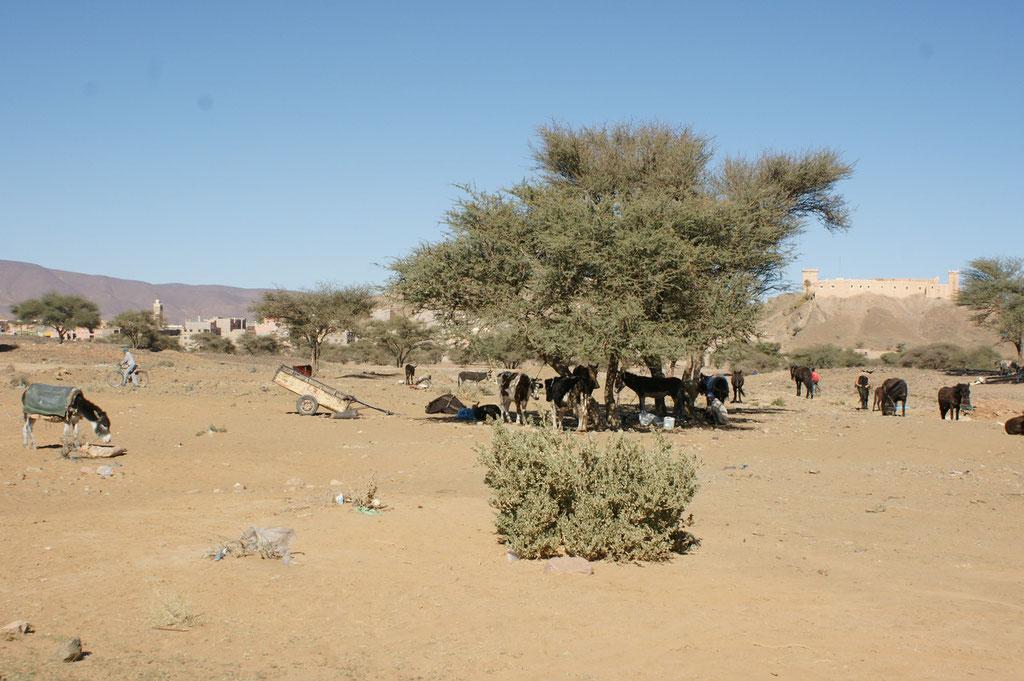 Der Eselparkplatz vor dem Markt