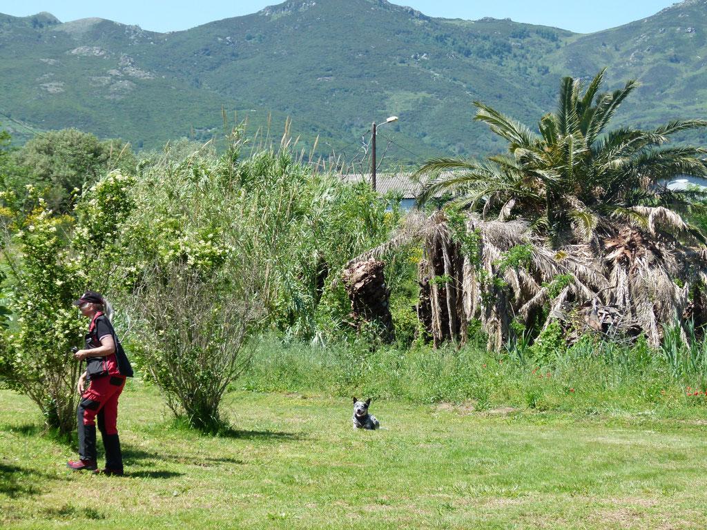 Asiatischer Laubholzbockkäfer Norma Kleiber Spürhundeführer mit Eddy