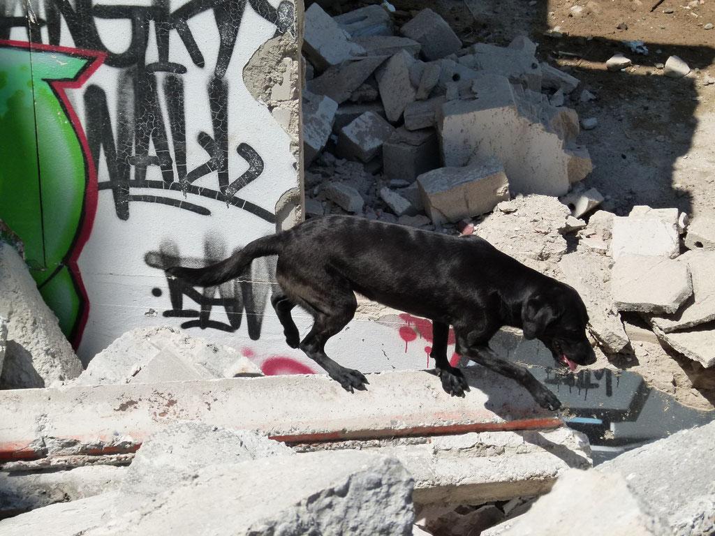 Maisha balanciert geschickt über die Trümmer!