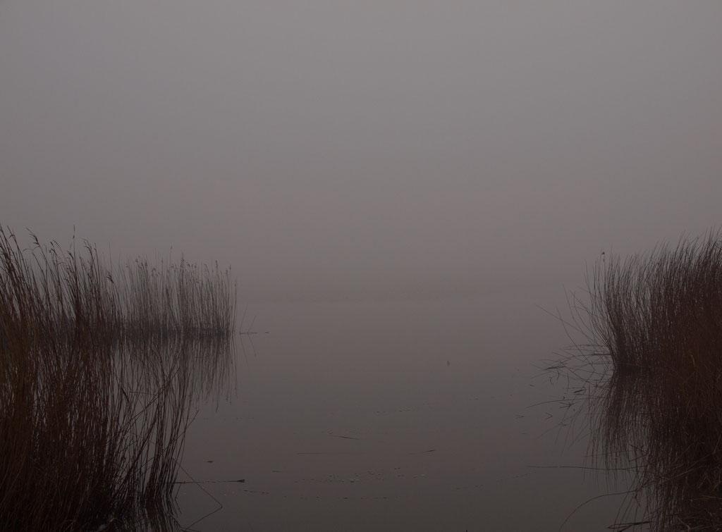 Reet am Rutebüller See