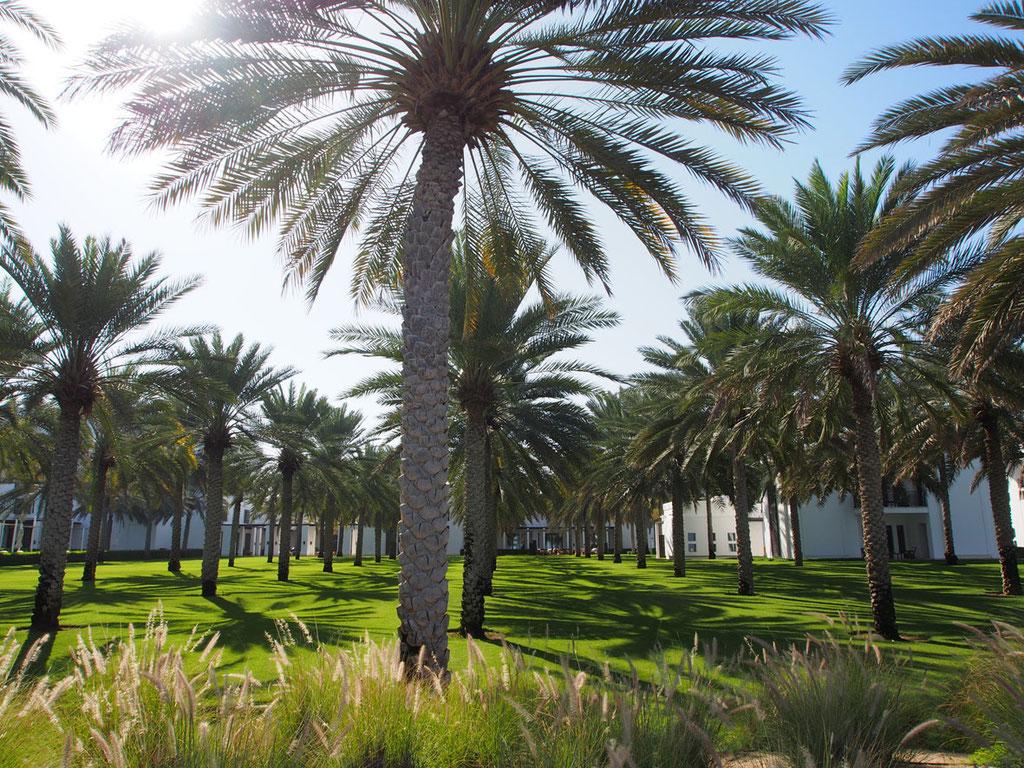 Oman: Der Garten des Luxushotels The Chedi Muscat wirkt wie eine Oase