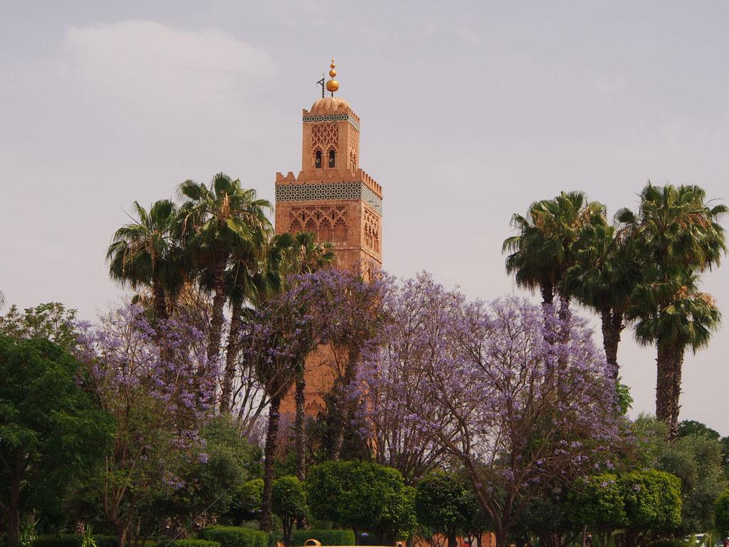 Marrakesch: die Koutoubia-Moschee, eingerahmt von blühenden Jakarandas
