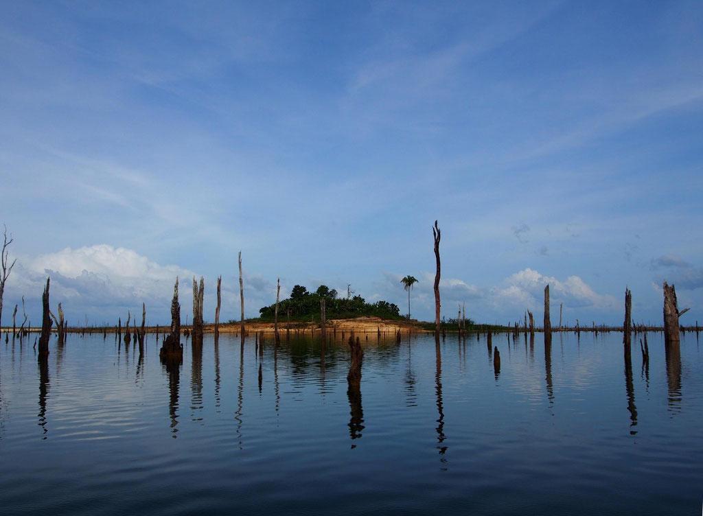Unbekanntes Suriname: Insel im Brokopondo-Stausee mit 50 Jahre alten Baumskeletten