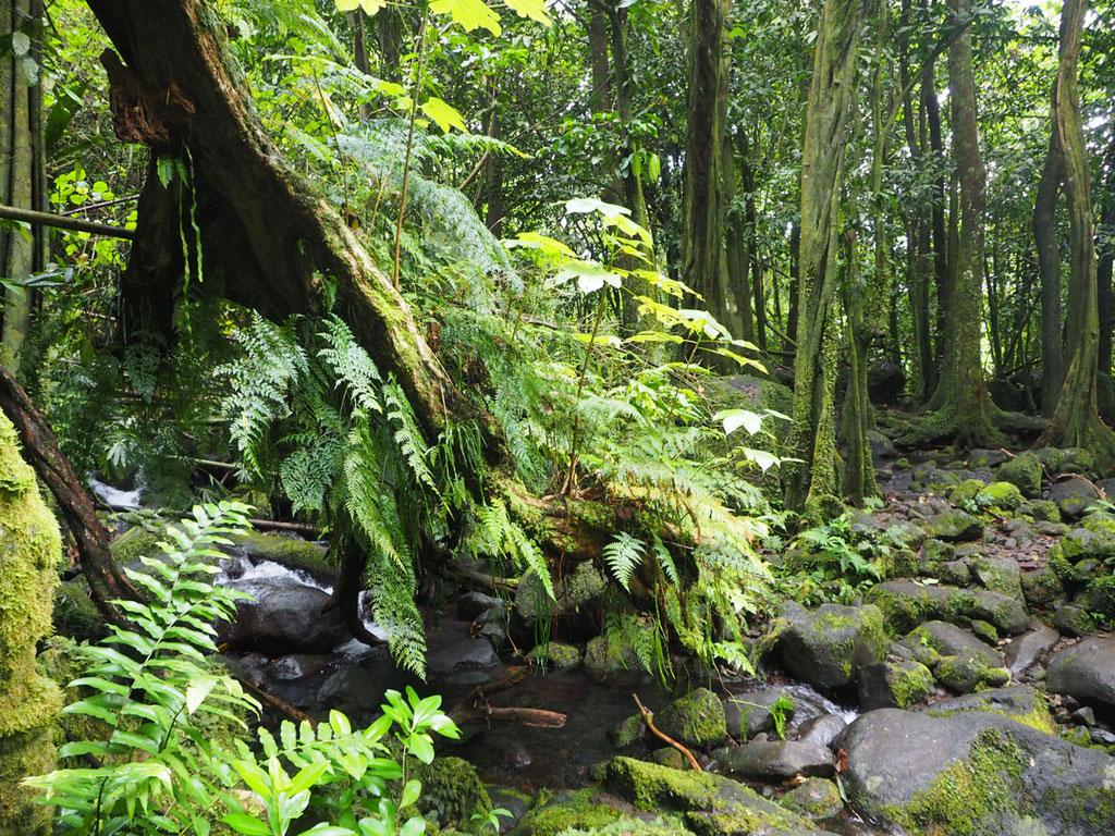 Tahiti: Urwald