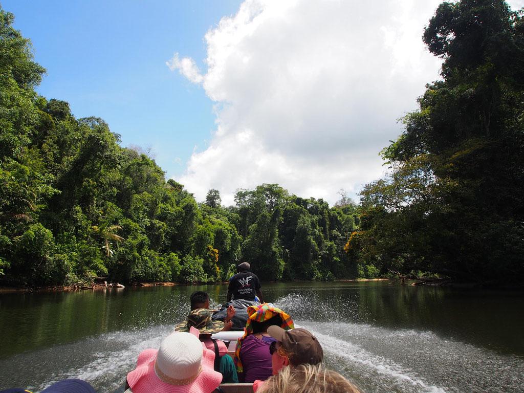 Unbekanntes Suriname: Wildnis u. Maroon-Kultur am Oberen Suriname-Fluss
