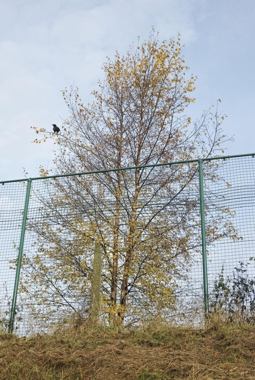 'Black Bird'