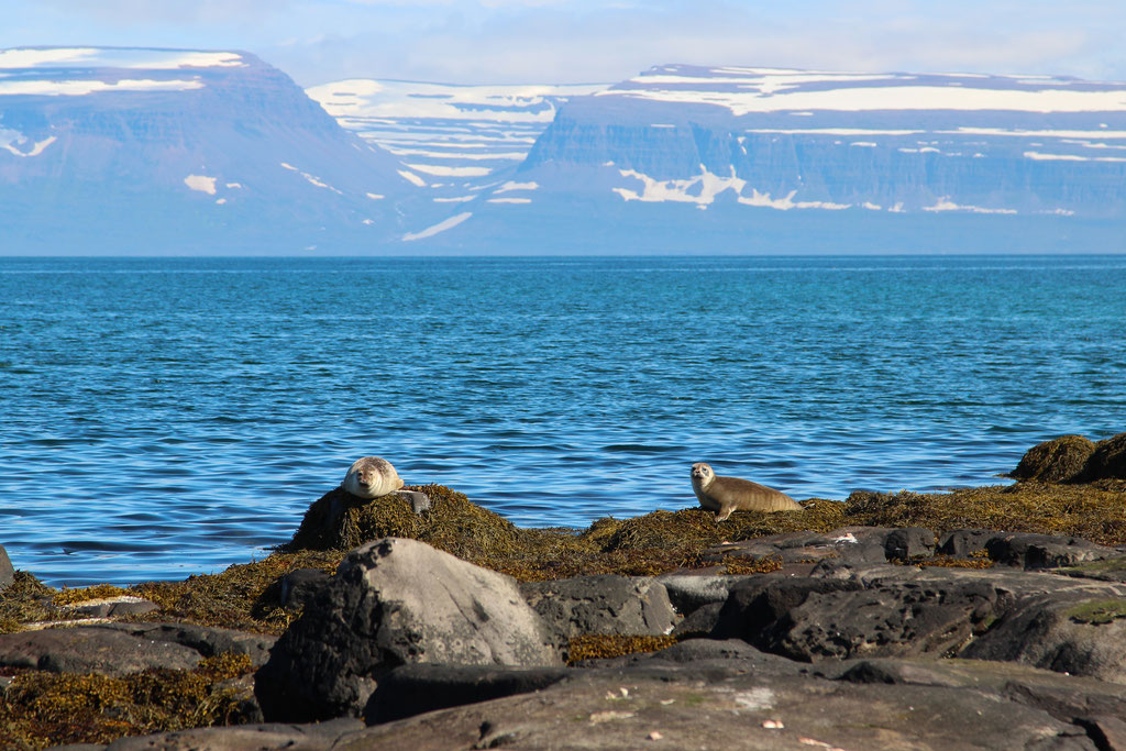 Лежбище тюленей вдоль дороги