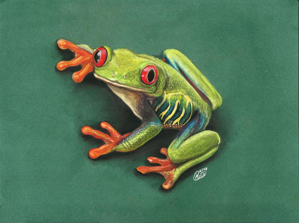 Zeichnung Rotaugenlaubfrosch