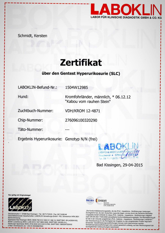 Kabous Laboklin-Zertifikat: Hyperurikosurie - Genotyp N/N (frei)
