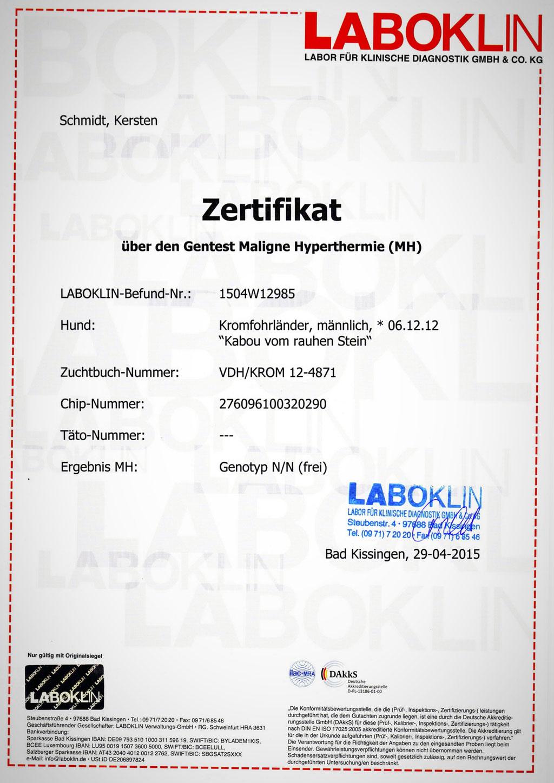 Kabous Laboklin-Zertifikat: Maligne Hyperthermie - Genotyp N/N (frei)