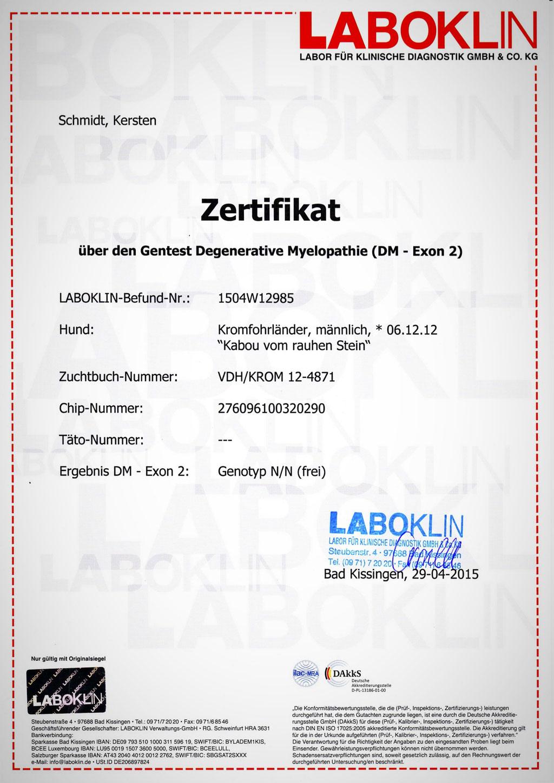 Kabous Laboklin-Zertifikat: Degenerative Mylopathie - Genotyp N/N (frei)