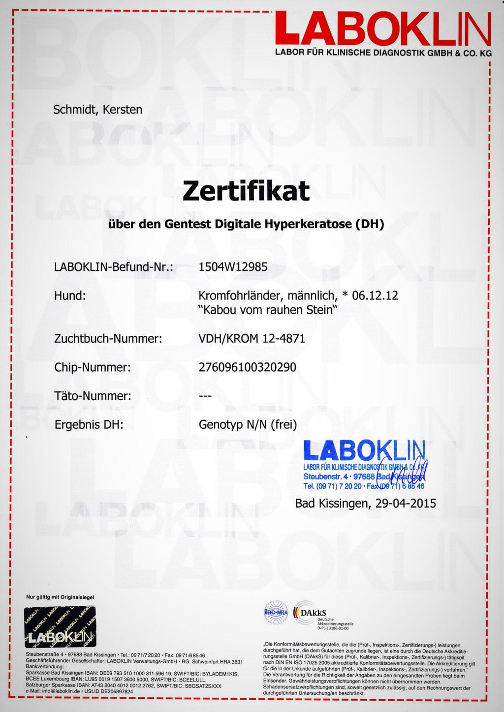 Kabous Laboklin-Zertifikat: Digitale Hyperkeratose - Genotyp N/N (frei)