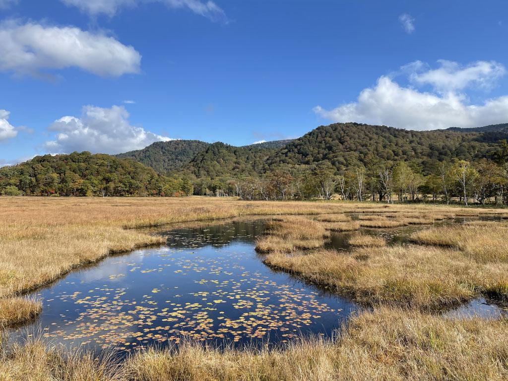 池塘の羊草の紅葉