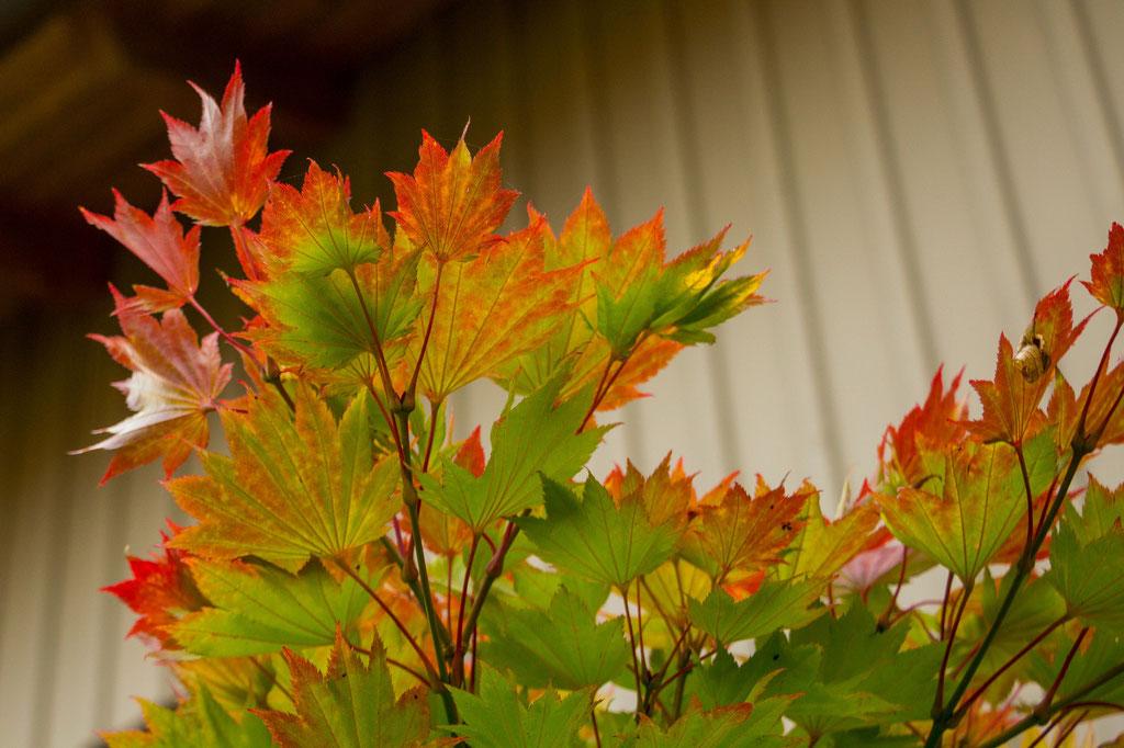 Herbst (Nordseite)