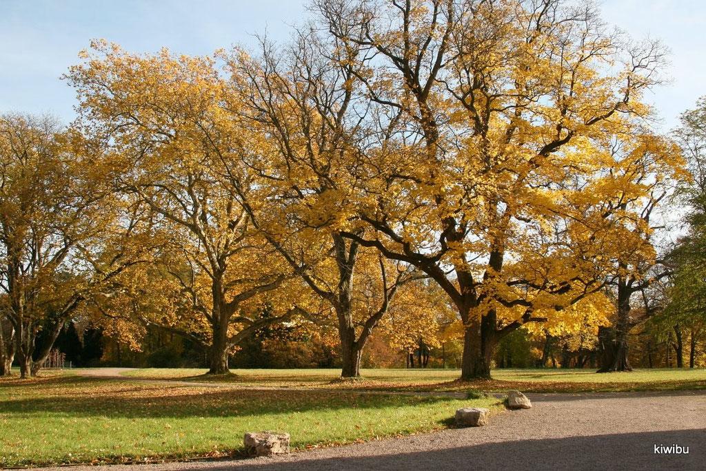 Herbststimmung in Belvedere
