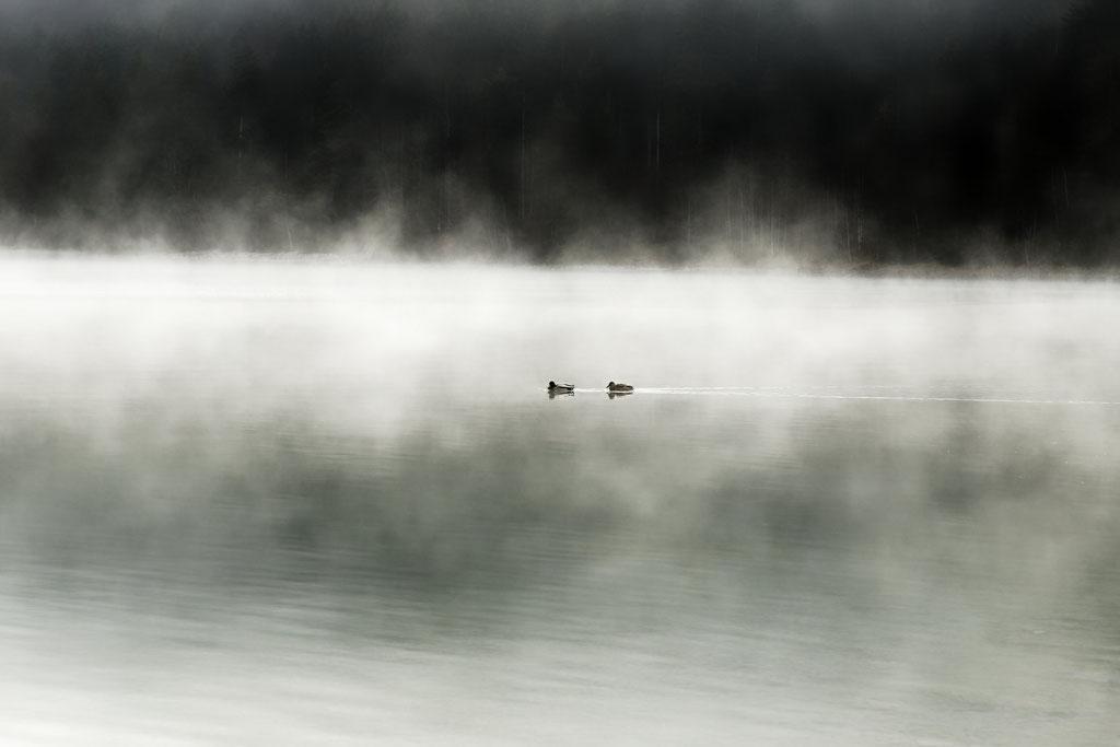 Walchensee - Enten im Nebel