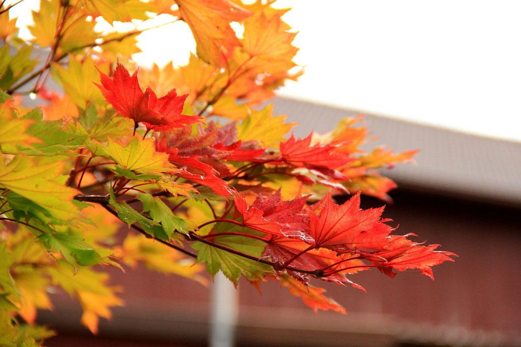 Herbst (Südseite)