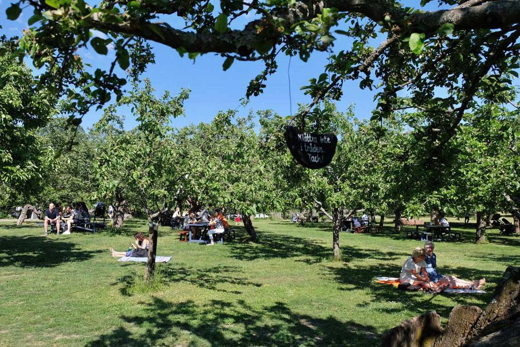 Rosendals Garden Picknick im Obstgarten, Djurgården Stockholm