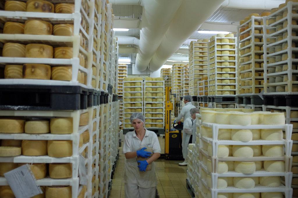 Besuch in der Käseproduktion von Gligora auf Pag